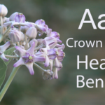 Health Benefits of Aak