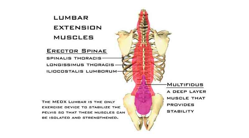 Strengthens your spine