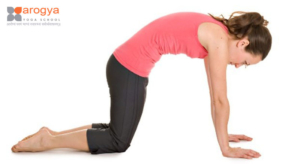 healthbenefitsofcatcowposes  yoga in rishikesh