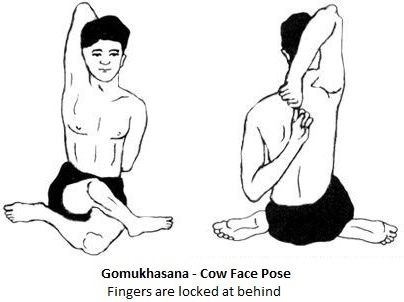 THE COW-FACE POSE