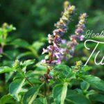 Health benefits of the tulsi plant