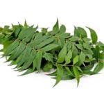 benefits of neem will surprise you
