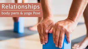 relationships between body parts and yoga postures